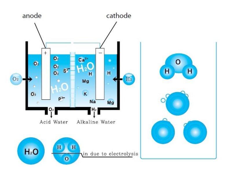 Le camere di ionizzazione contengono elettrodi positivi e negativi che permettono di dividere l'acqua in alcalina e acida.