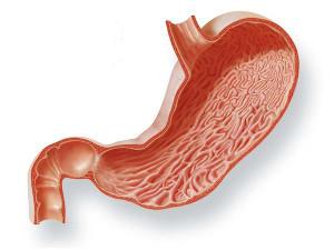 Stomaco: l'acqua alcalina ionizzata può aiutare nei casi di iperacidità, gastrite, ulcera, reflusso, ernia iatale. Durante i pasti bere acqua depurata (non alcalina).